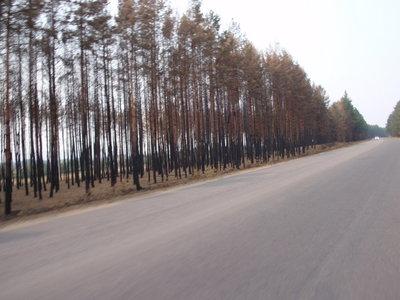 P8144730_forest2.jpg